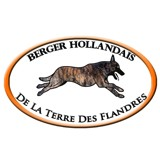 Photo de Berger hollandais de l'élevage Elevage de la Terre des Flandres