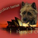 Photo de Terrier australien de l'élevage Heirs of Oz