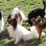 Photo de chiens de l'élevage DU DOMAINE DE HUNAUDAYE