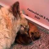 Photo de Eurasier de l'élevage Kassouloa