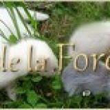 Photo de Furet de l'élevage La Forêt d'Oy