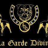 Photo de American Staffordshire Terrier de l'élevage La Garde Divine