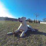 Photo de chiens de l'élevage La Plaine d'Orion