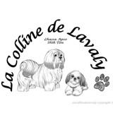 Photo de chiens de l'élevage Elevage de la Colline de Lavaly