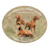Photo de Braque hongrois à poil court de l'élevage LE CHAMP CLEUET