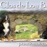 Photo de Bouvier bernois de l'élevage Le Clos de Lou Barrès
