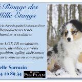 Photo de chiens de l'élevage Le Rivage des Mille Etangs