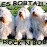 Photo de Bobtail de l'élevage Les Bobtails Rock'n Bob