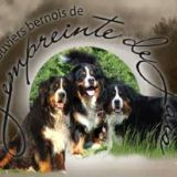 Photo de Bouvier bernois de l'élevage Les bouvier bernois de l'empreinte de jais