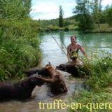 Photo de Labrador Retriever de l'élevage Les labradors de la truffe en quercy
