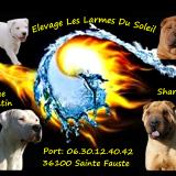 Photo de chiens de l'élevage Les Larmes du Soleil