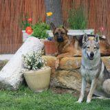 Photo de chiens de l'élevage Les plaines de Meyrans