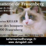 Photo de Ragdoll de l'élevage Les Ragdolls de Frauenberg