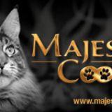 Photo de Maine Coon de l'élevage MAJESTIC COON