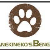 Photo de Bengal de l'élevage Manekineko