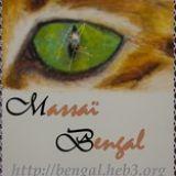 Photo de Bengal de l'élevage MASSAI-BENGAL