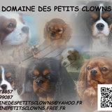 Chiot de l'élevage : DU DOMAINE DES PETITS CLOWNS