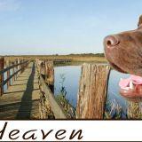 Photo de chiens de l'élevage PARK-HEAVEN