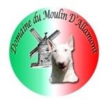 Photo de Bull Terrier de l'élevage Domaine du Moulin d'Allamont