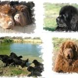 Photo de chiens de l'élevage Elevage de la Croisée des Sources