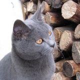Photo de chats de l'élevage Pop'art