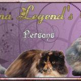 Photo de Persan de l'élevage Sequana Legend's