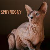 Photo de Sphynx de l'élevage Chatterie SPHYNXCAT