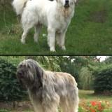Photo de chiens de l'élevage Domaine des Dhalbergs