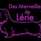 Photo de Teckel de l'élevage Des Merveilles de Lérie
