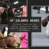Photo de Cocker américain de l'élevage Of Islands Bears