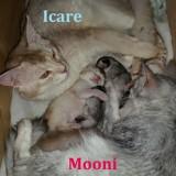 Photo de chats de l'élevage Waldo's Sweet Lullaby