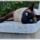 Photo de Thaï de l'élevage Aurore Australe