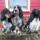 Photo de Cocker anglais de l'élevage Elevage de La Pierre aux Leux