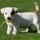 Photo de chiens de l'élevage De Malaga