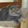Photo de chats de l'élevage CHATTERIE DE VALFLEURY
