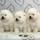 Photo de chiens de l'élevage Royaume d'Exquise