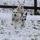 Photo de Dalmatien de l'élevage Dalmatiens du bois des ternes
