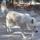 Photo de chiens de l'élevage ELEVAGE DE LA FORET DE MISS PURPLE