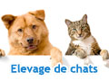 Photo de chats de l'élevage Chatterie Nekobaa