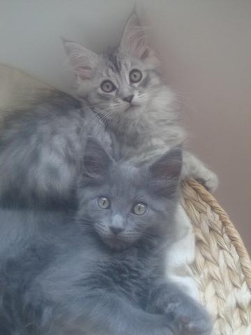 Le jardin des chats : Elevage dans le département Vaucluse ...