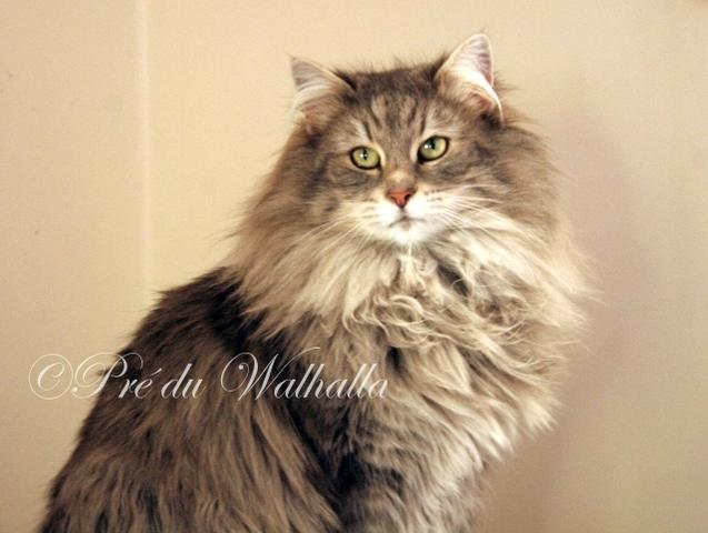 Walhalla chat