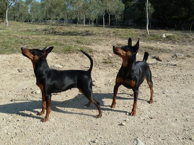 EVOKALY : Elevage Rottweiler dans le département Bouches