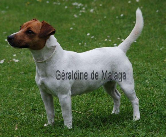 Cairn Terrier - Jack Russell Terrier - Shih Tzu Adresse : 4 route de