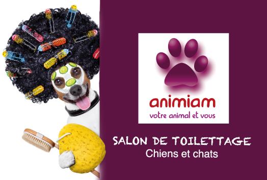 Salon de toilettage animiam toilettage chiens chats for Salon des chiens
