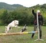 34 Lodève Education canine douce