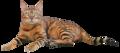 Serenity Cat