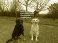 Club canin educadog