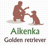 Aikenka Elevage Golden retriever