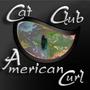 Cat Club American Curl
