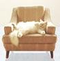 Animal-Sitting